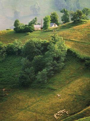 Farm-region-Bearn-France-departement-Pyrenees-Atlantiques